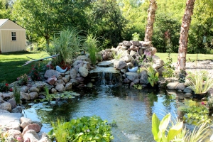 Des Moines Koi Ponds & Water Gardens Experts!